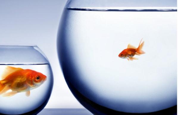 Kies de grootte en demografische kenmerken van je doelgroep - afbeelding van grote en kleine vis in kom | Anneke van der Voort-Kruk, PRminded | Adviseur Social Media Plan en Strategie | LinkedIn trainer | voor ZZP en MKB | Bavel, Breda, Tilburg